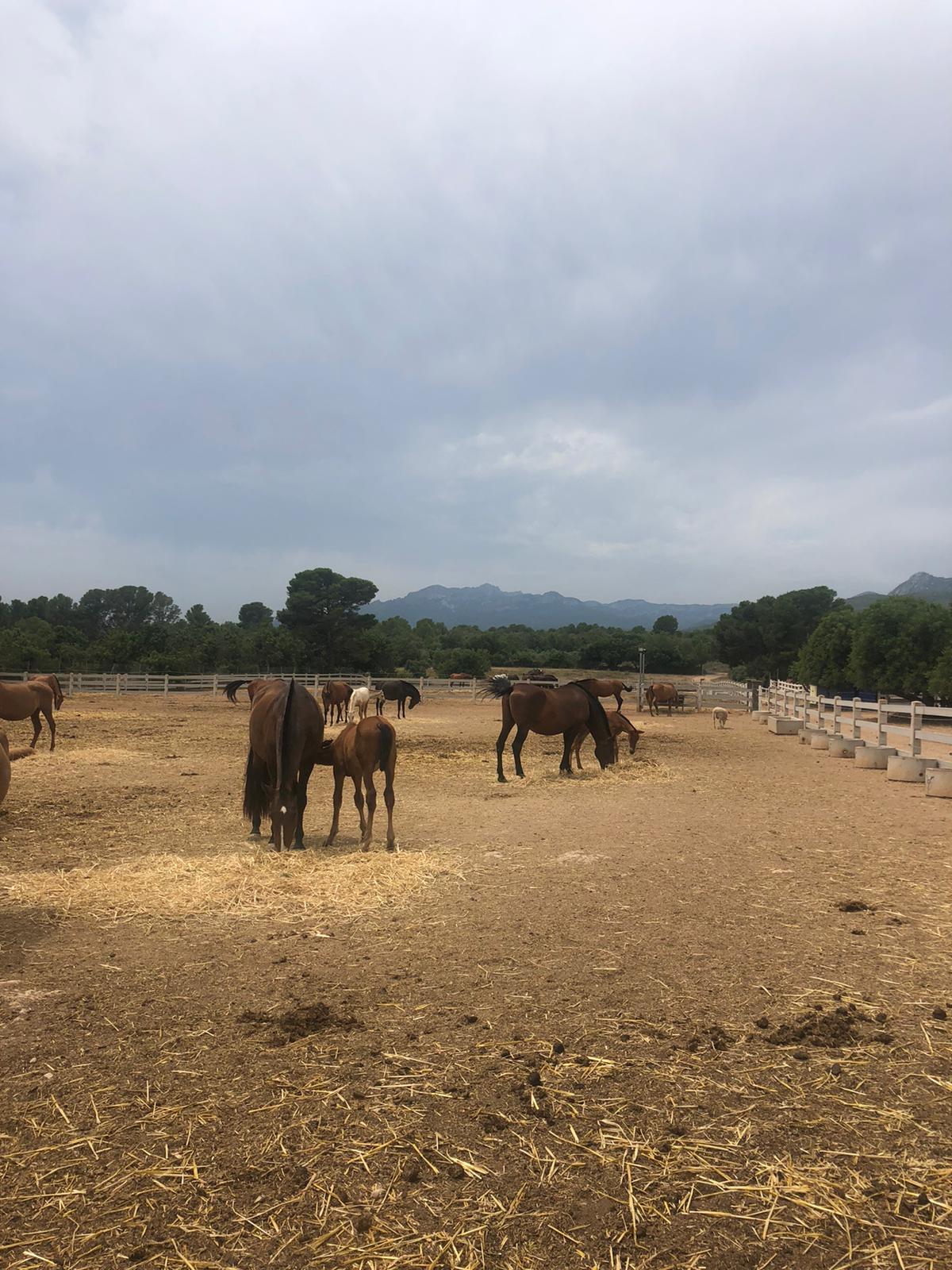 Rouwretraite met paarden